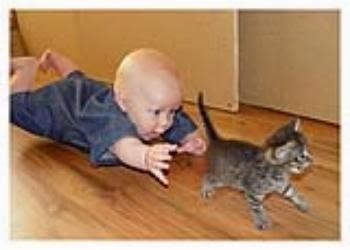 gato y mi bebe gatito