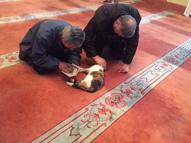 Un imán abre su mezquita a los gatos callejeros
