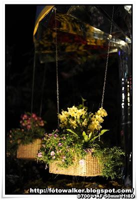 花展2013 夜