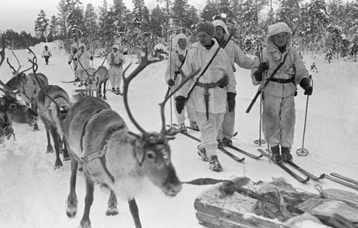 Reindeer in the Finnish Winter War against bloody Russia