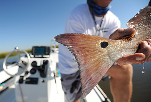 May Mosquito Lagoon Redfish Fishing Report with Capt. Chris Myers