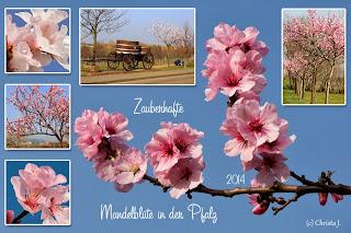 Mandelblüten von Christa