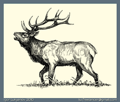 Elk illustration, drawing by Igor Lukyanov (cross-hatching)