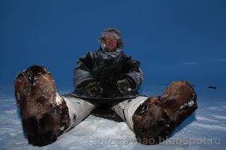 Бафины хорошо, а олени лучше. Остров Вайгач. Ненецкий автономный округ. Природа НАО.