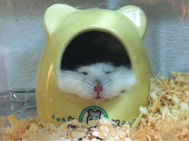 Funny animals of the week - 10 May 2013, funny animal pictures, cute animal photos, funny pictures of animals, animal photos
