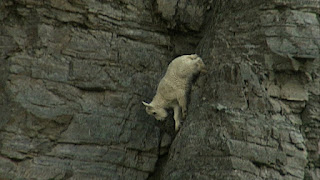 Feel de Rock - Be the Rock - Rock Climbing goats