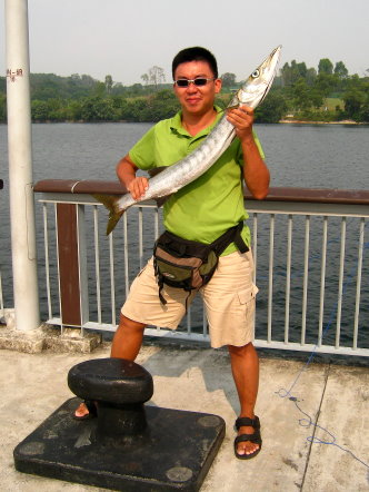 Yellowtail Barracuda [Sphyraena Flavicauda] also know as Saw Kun 沙君 [Hokkien] or Ikan Kacang [malay] weighing 3kg plus caught by ME at Woodland Jetty on 10th July 2013 using live Five-spot Herring or Assam fish (local), Selangat (malay) on float.