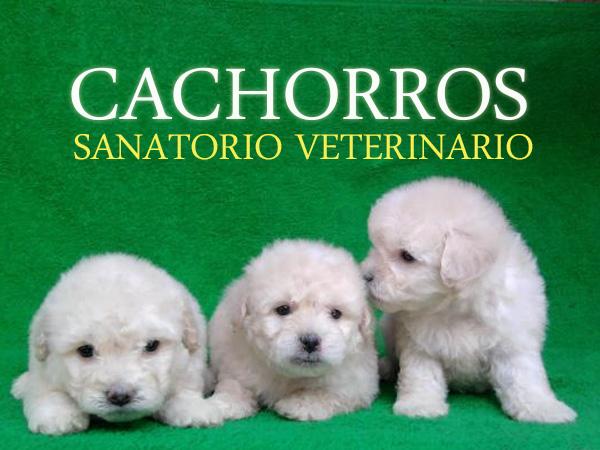 Cachorros Sanatorio Veterinario