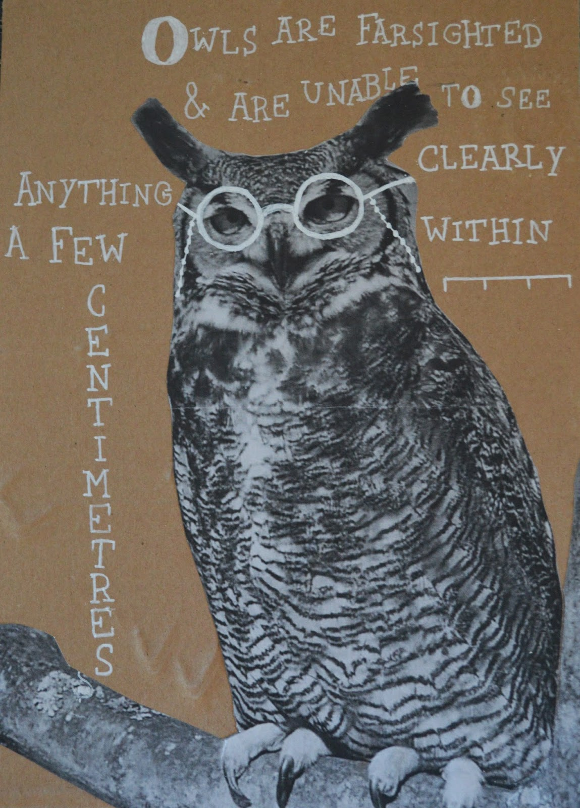 Illustrated Menagerie: Owl - Research Methodology.