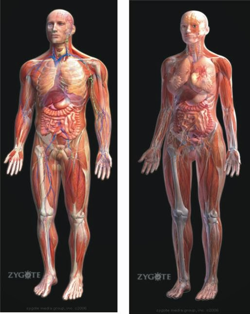 Mengenal Struktur Tubuh Manusia (Anatomi)