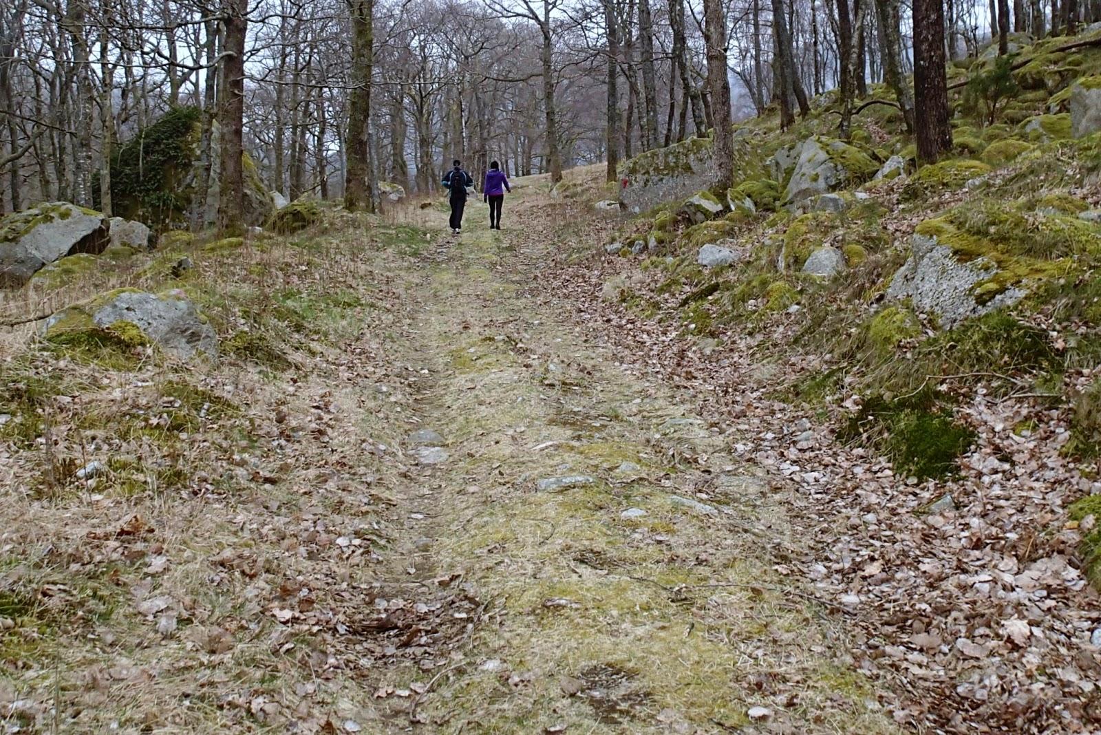 Enkelt trail turer Schwarzwald