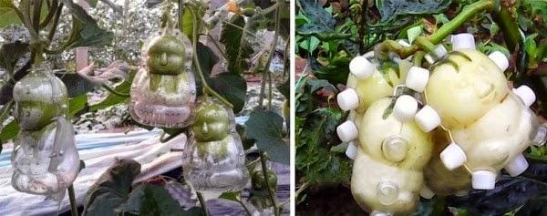 Изобретение фруктовый Будда