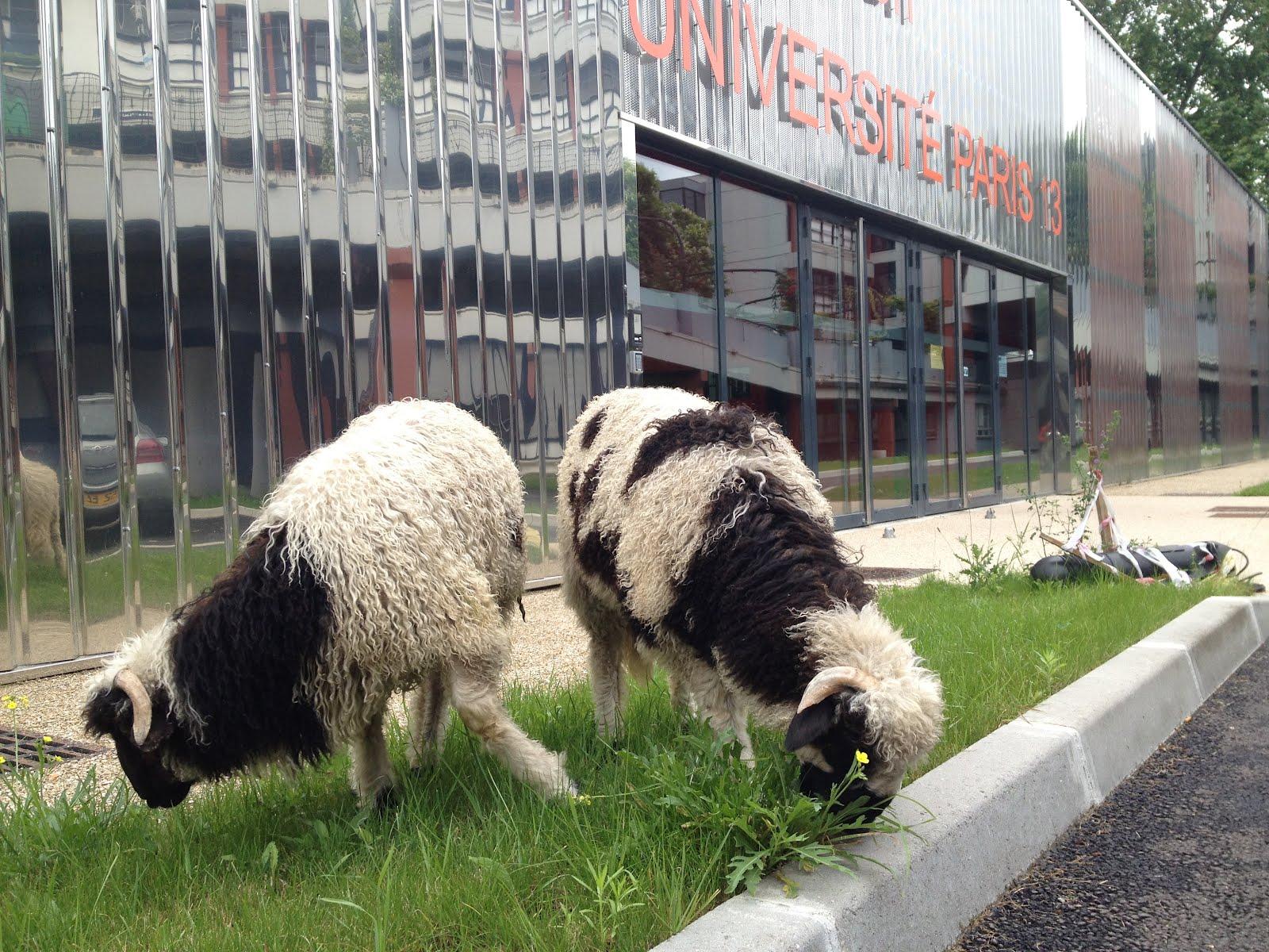 ville hybride les moutons d 39 olivier l 39 universit de. Black Bedroom Furniture Sets. Home Design Ideas