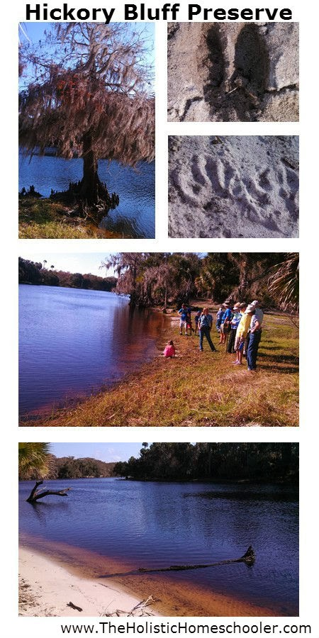 A photo collage of our hike to Hickory Bluff Preserve in Osteen, Florida. @tmichellecannon