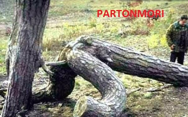 PARTONMORI