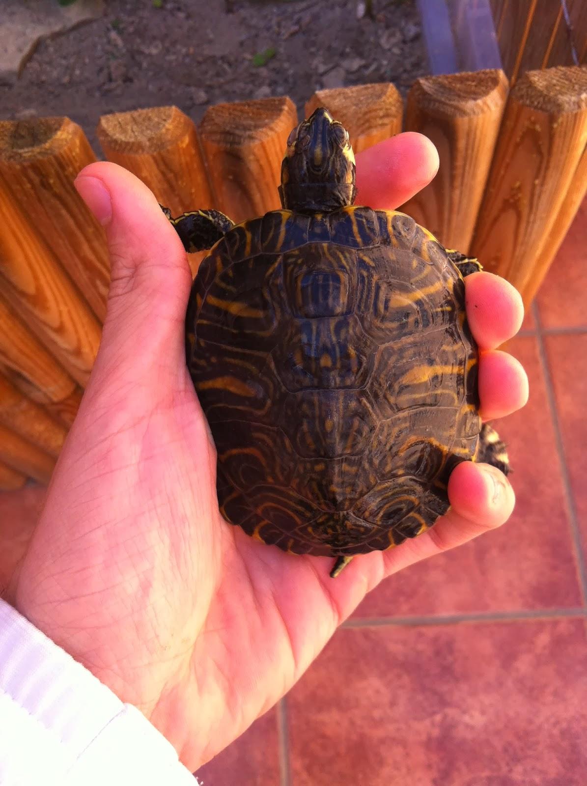 Vida tortuguera estanque prefabricado para acu ticas for Estanque prefabricado tortugas