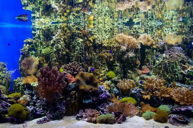 Путешествия: Москвариум кораллы фото