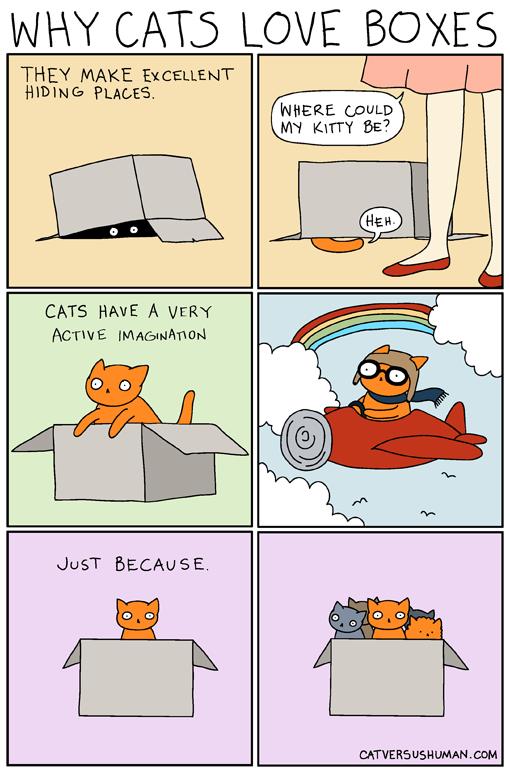 cat diseases humans
