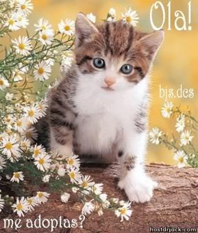 imágenes tiernas de gatos
