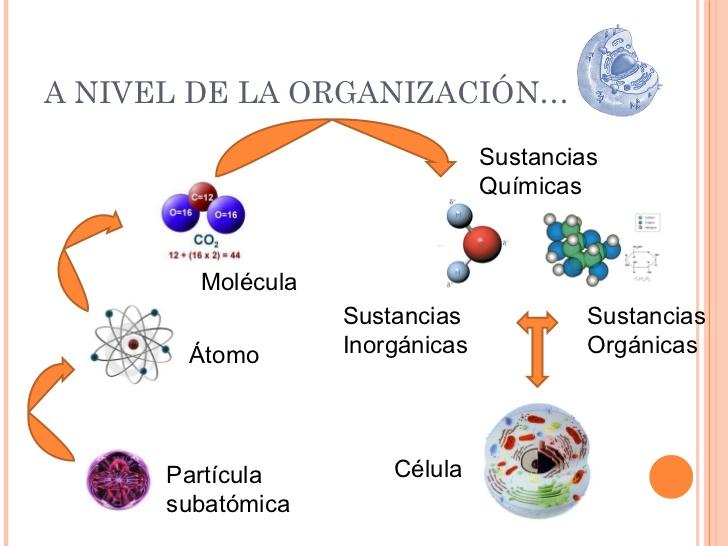 Ciencias naturales mmsr la materia necesaria para la vida for Molecula definicion