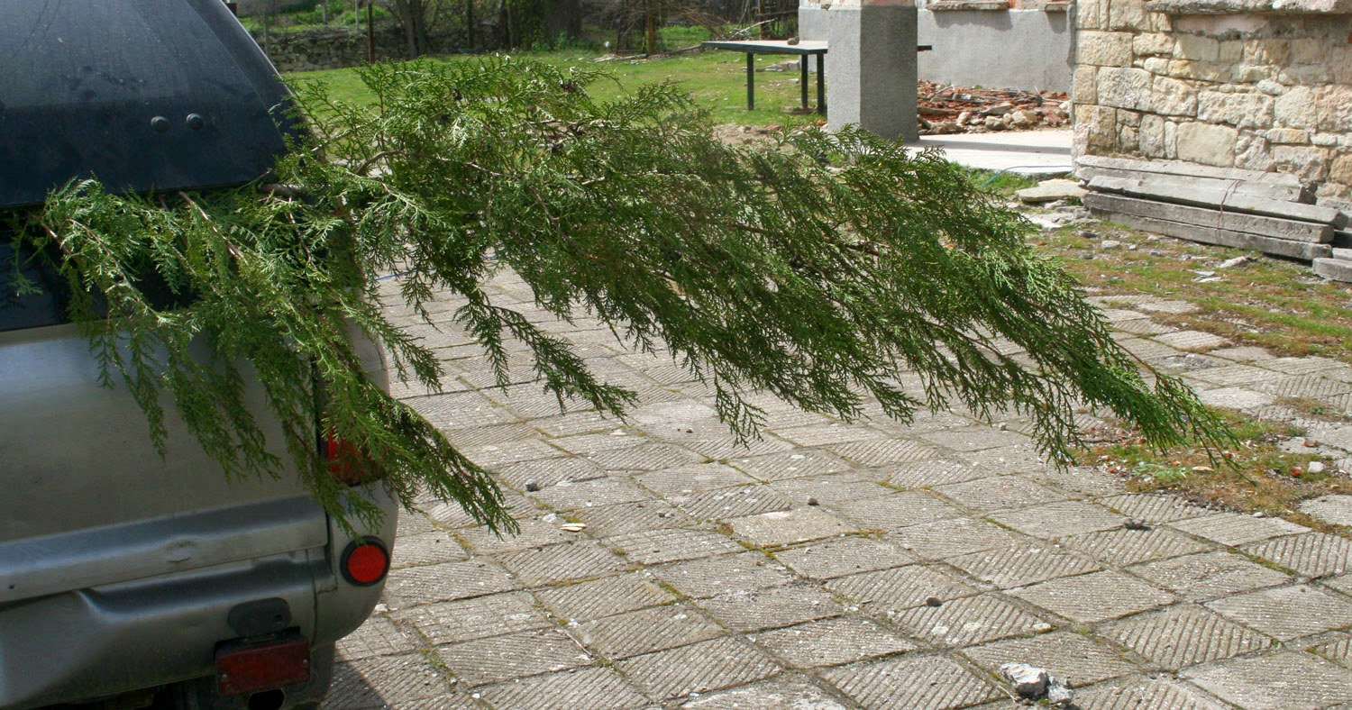 I brought the tree back like this