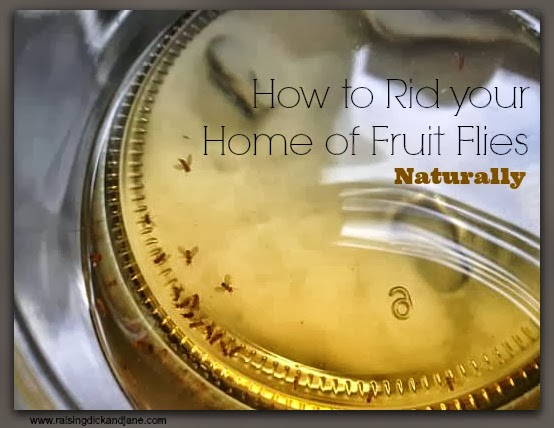 vacuum pump oil yellow jacket get rid of fruit flies in house plants. Black Bedroom Furniture Sets. Home Design Ideas