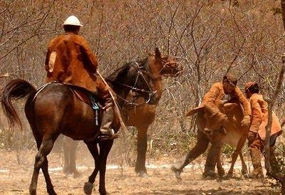 Pega de gado na caatinga: pura cultura nordestina
