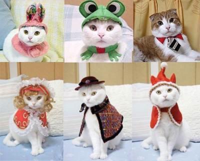 Feliz cumple Gato ! Imagenes+de+gatos+con+disfraz