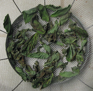Quite Dry Basil Leaves in Colander