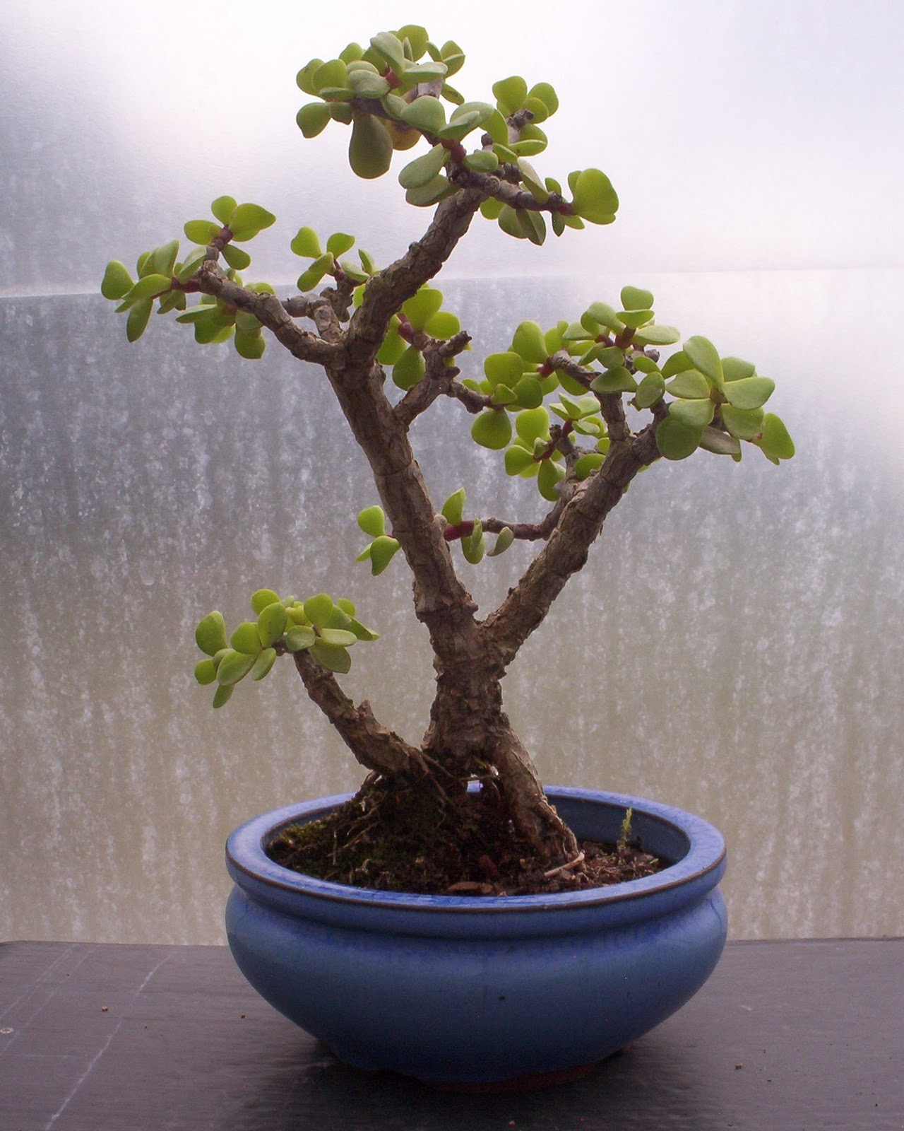 Bonsai Beginnings Make And Take Home Your Own Little Tree