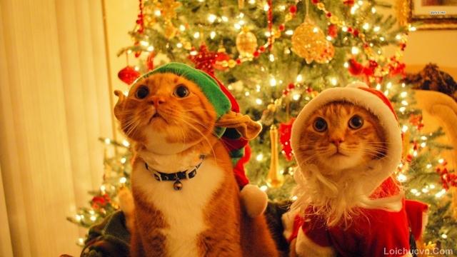 Tải hình ảnh đẹp ngày lễ giáng sinh
