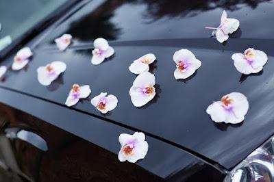 dekoracja samochodu storczyki