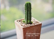 http://finfingarden.blogspot.com/2014/12/euphorbia-horrida-cactus-cacti-nature.html