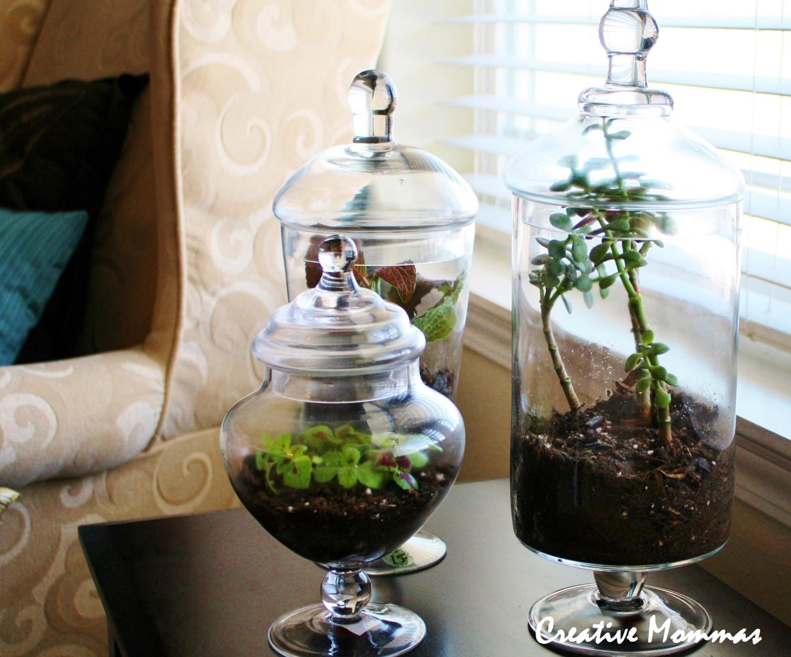 Creative mommas indoor gardening for Indoor gardening glasses