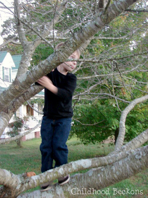 Testing branches while climbing trees in childhood