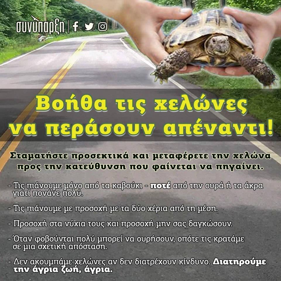 Βοήθα τις χελώνες να περάσουν απέναντι!