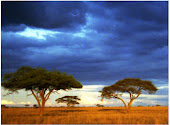 Two Trees at Sunset in Africa