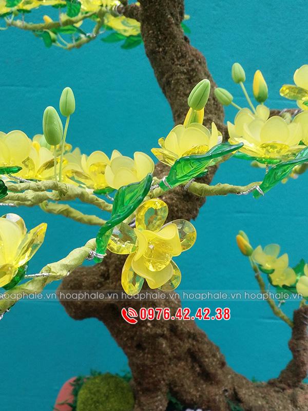 Mẫu hoa mai vàng