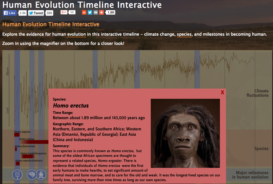 the history of human evolution essay