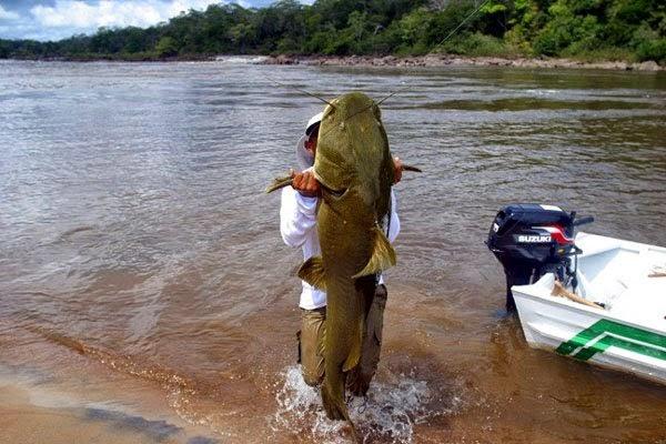 Ikan Lele Paling Besar