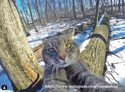 manny-instagram-gato