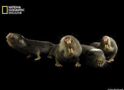 Captures Animals, National Geographic Photographer Joel Sartore