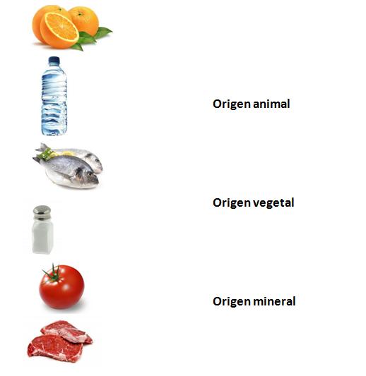 clasificacion de los alimentos segun su origen