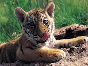 fotos de algunos animales salvajes