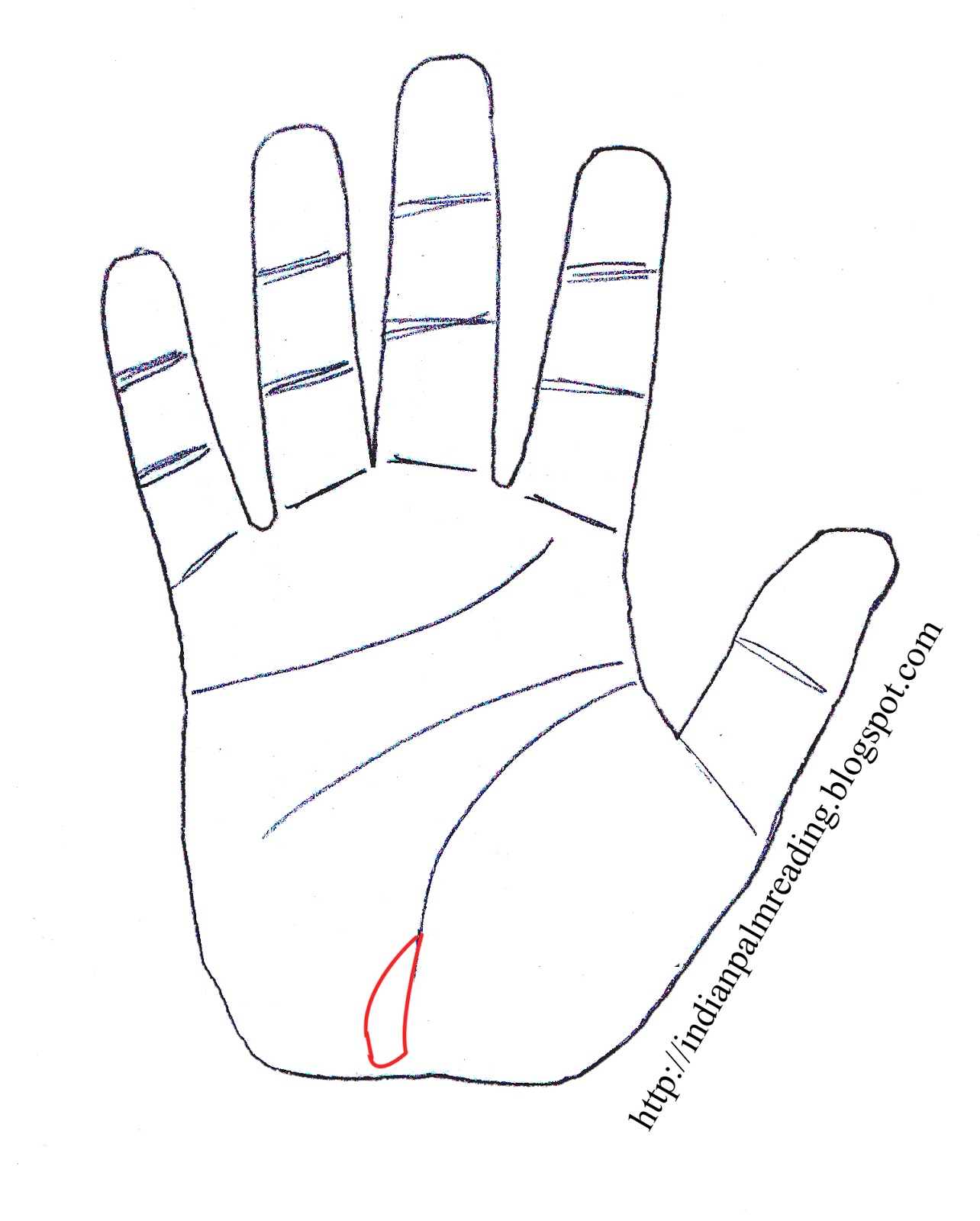 Guessing on the hands (palmistry): the value of lines 65