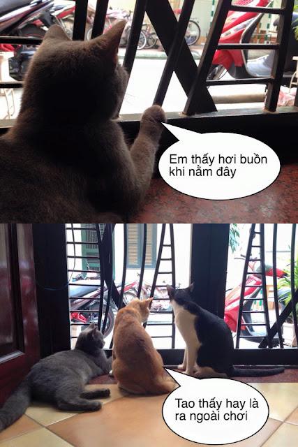 Hình ảnh chế hài hước về thái độ của con mèo