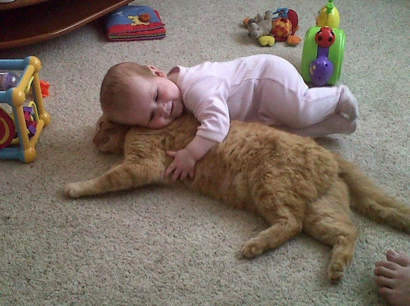 Foto bayi lucu bermain dengan kucing binatang kesayangannya