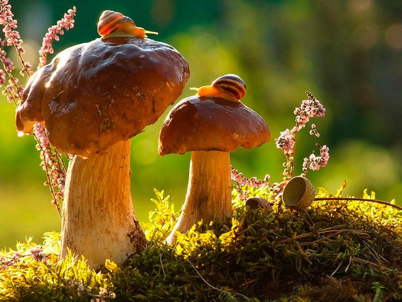 Un mágico mundo de hongos Por Vyacheslav Mishchenko