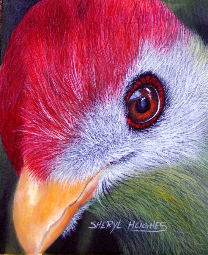 كلُ يتفاخر بجماله Red-crested-turaco