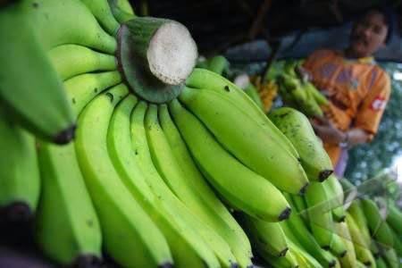 Kandungan Gizi Nutrisi Pisang Ambon & Manfaatnya
